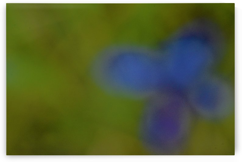 Abstract Art Photograph Bokeh - Blue Floral by Puzbie