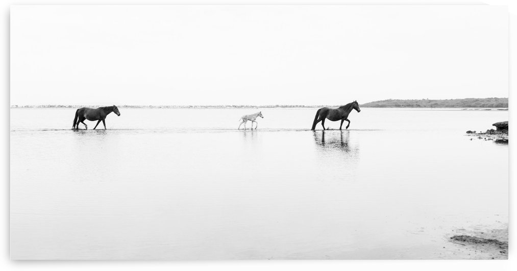 WALKING ON WATER by ANDREW LEVER GALLERY