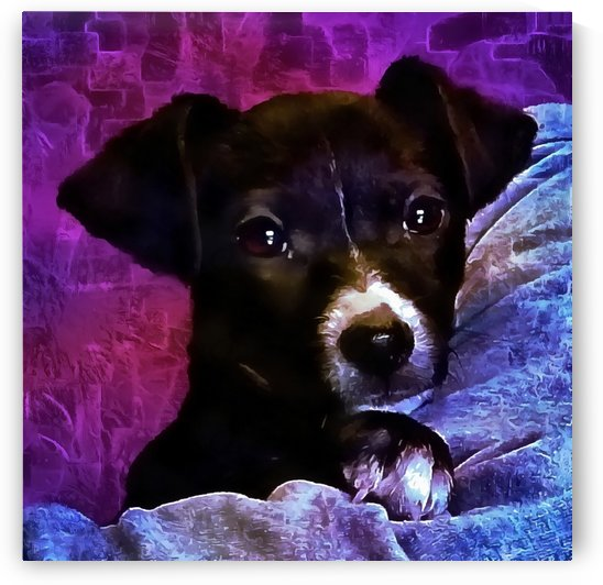Soft Puppy Snuggles by Dorothy Berry-Lound