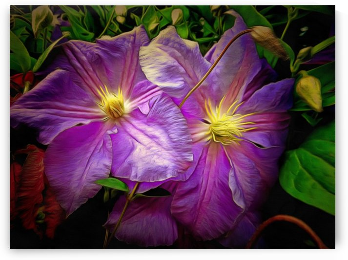 Clematis Azure Pearl by Dorothy Berry-Lound