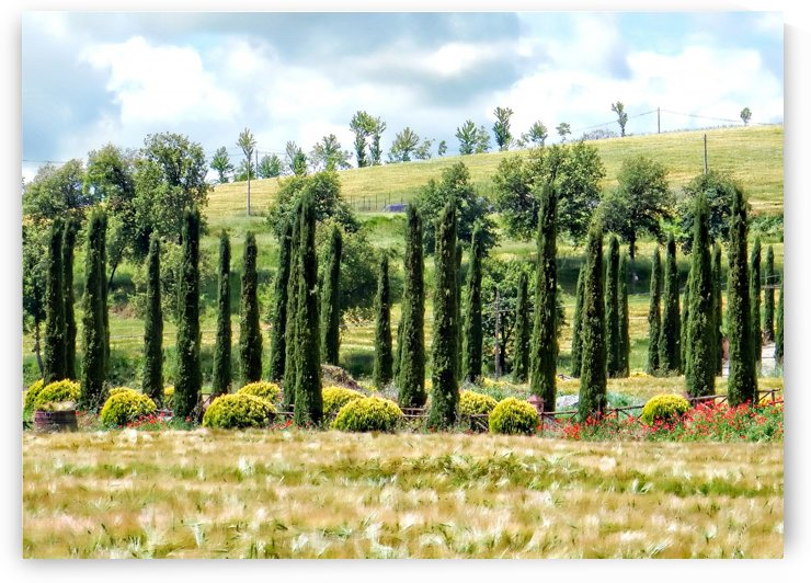 Cypress Heaven by Dorothy Berry-Lound
