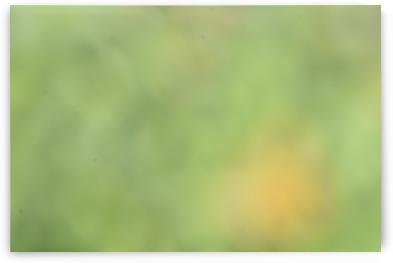 Abstract Art Bokeh - greens and yellow by Puzbie
