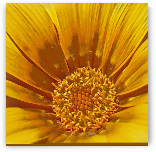 Gazania  Yellow - abstract flower art  by Puzbie