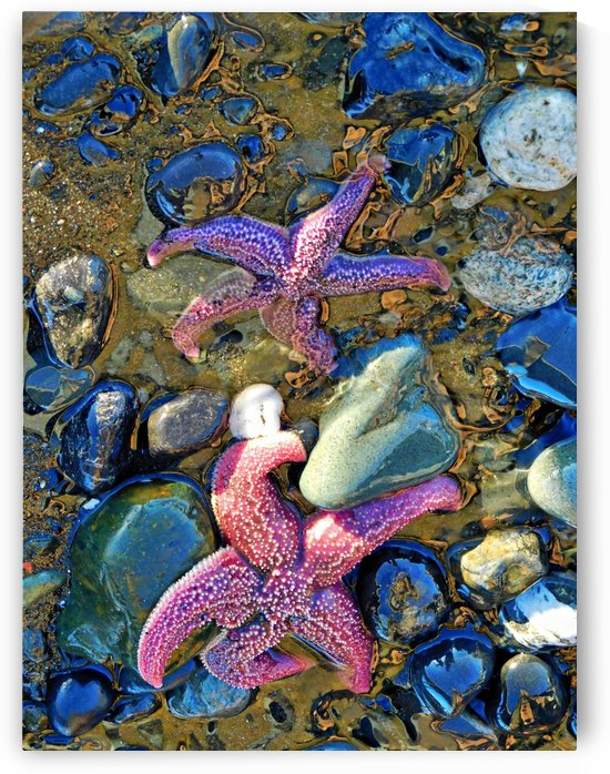Dancing Starfish by 151 West