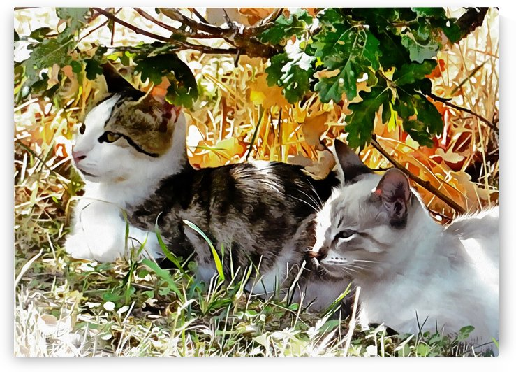 Even Kittens Gossip by Dorothy Berry-Lound