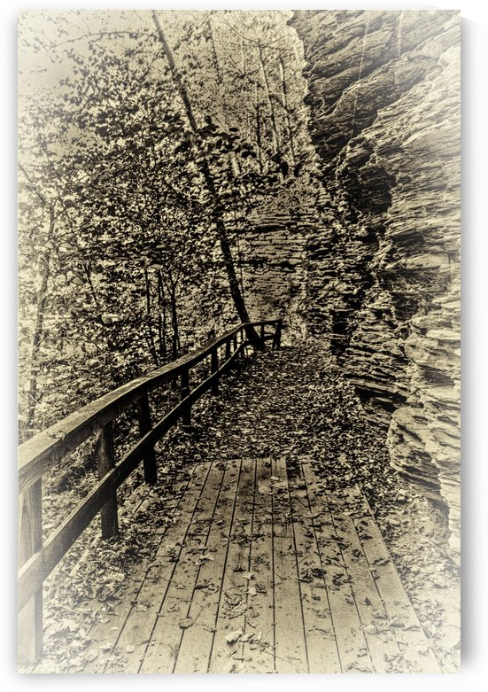 Pathway in Sepia by William Norton Photography