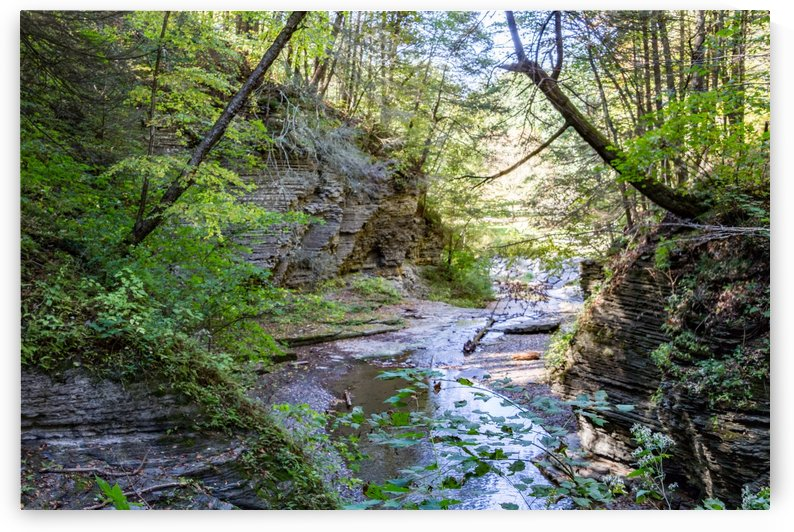 Eagle Cliff Falls 19 by William Norton Photography