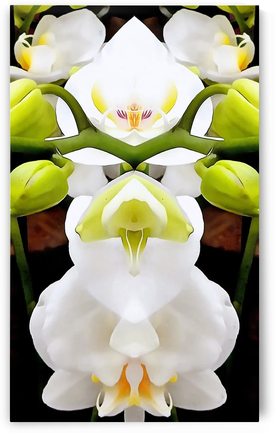 White Orchid Pattern 4 by Dorothy Berry-Lound