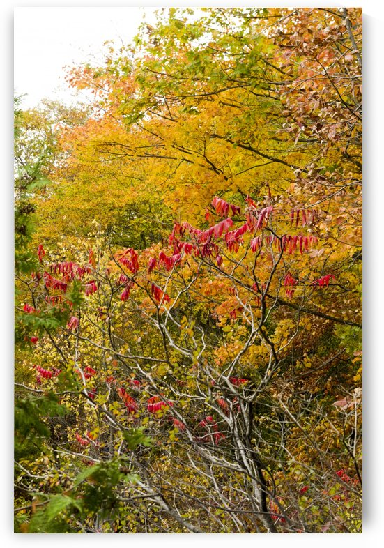 Autumn on Pink Lake 25 by Bob Corson