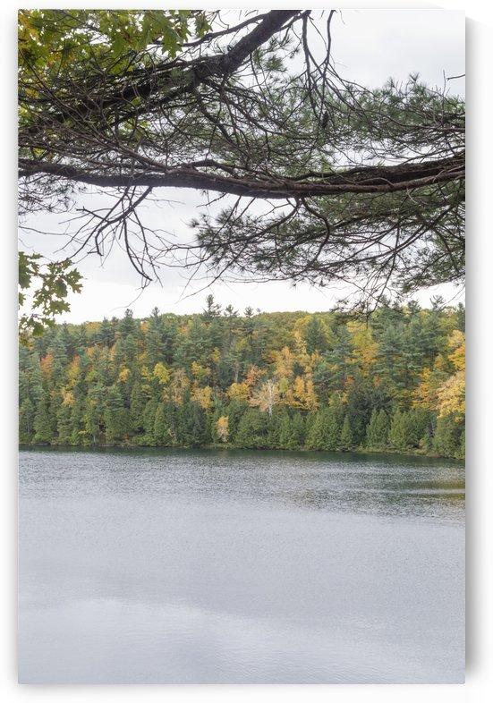 Autumn on Pink Lake 22 by Bob Corson