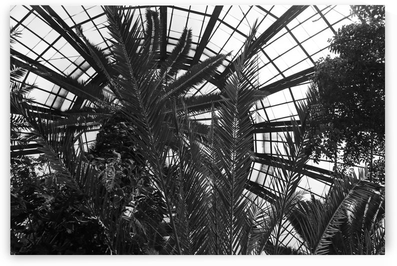 Bell Isle Conservatory Dome 1 BW by Mary Bedy