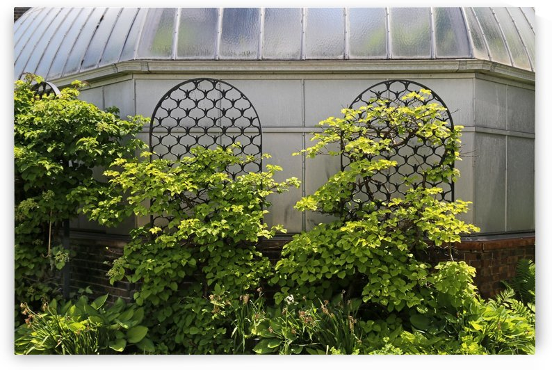 Belle Isle Consevatory Trellis by Mary Bedy