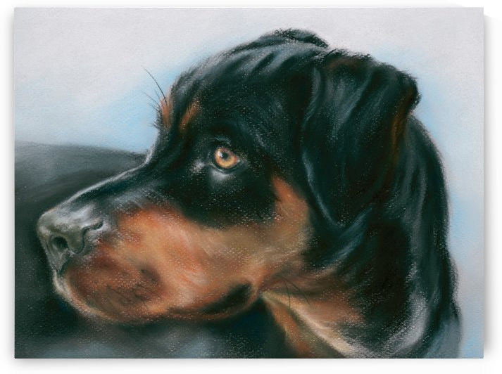 Rosie the Rottweiler Mix by MM Anderson