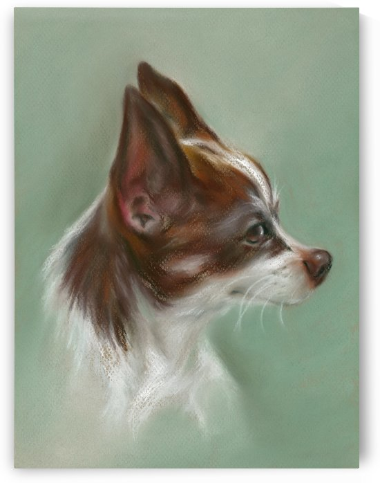 Brown and White Chihuahua by MM Anderson