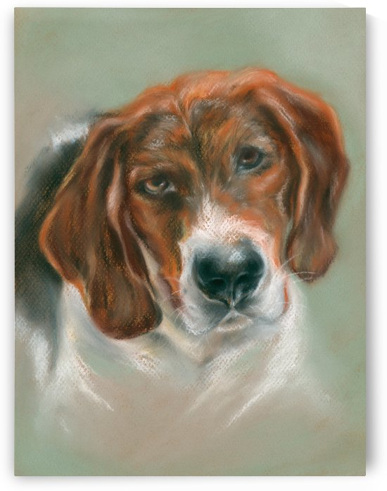 Basset Hound Mix Pup by MM Anderson