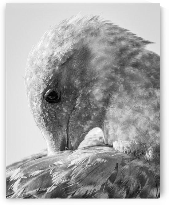 Tsawwassen Seagull by Ty Hedden
