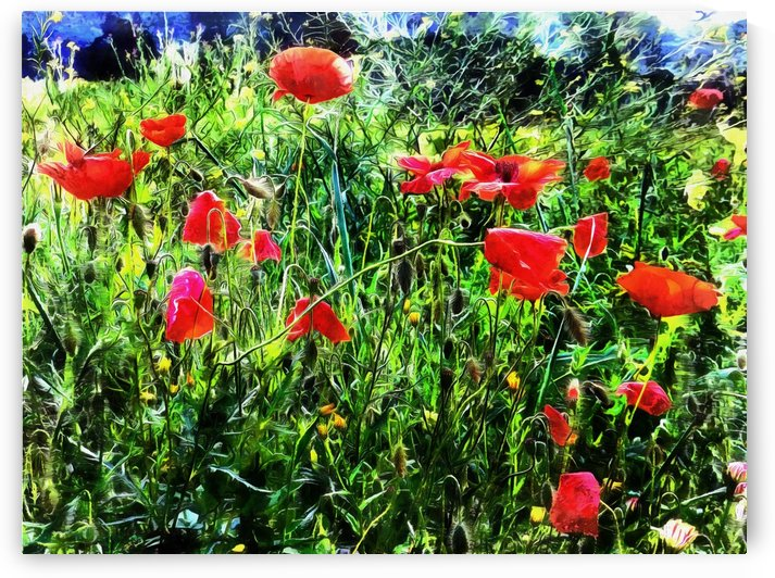 Green Pasture With Red Poppies by Dorothy Berry-Lound