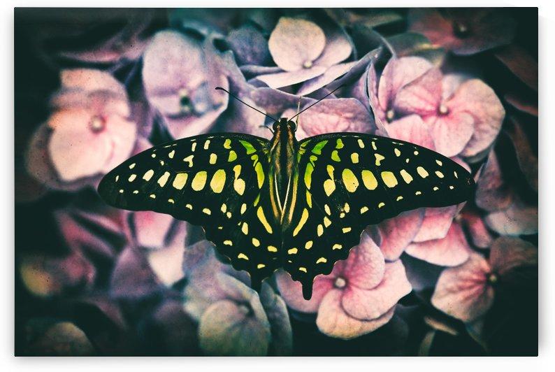 Vintage Butterfly by Vincent Naze