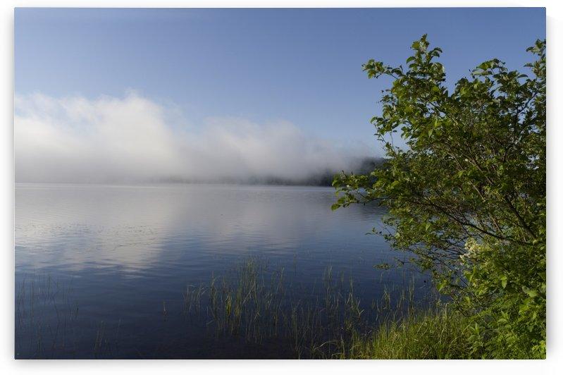 Early Morning Fog Bank by Bob Corson