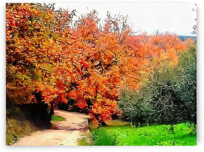 Autumn Golden Colours Umbria by Dorothy Berry-Lound