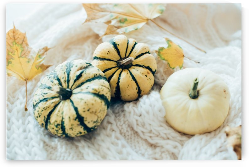 Three pumpkins by Daria Minaeva