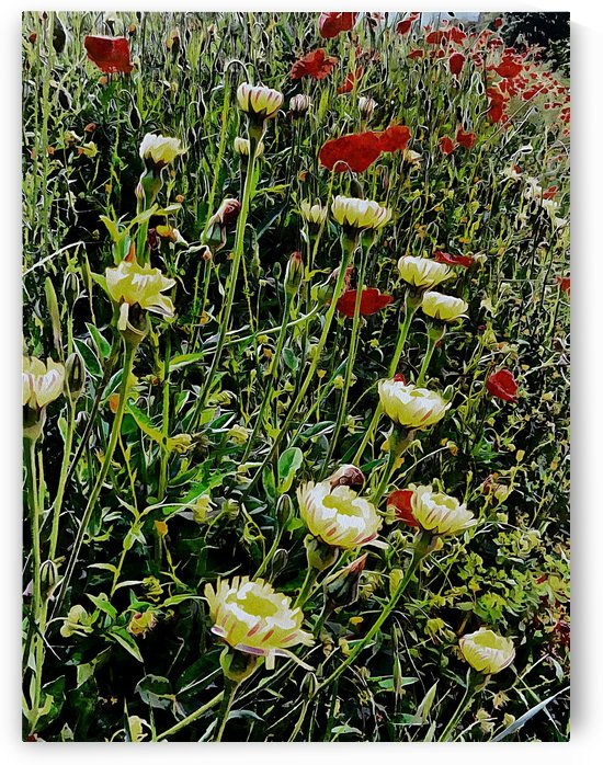 Italian Wildflowers with Red Poppies by Dorothy Berry-Lound