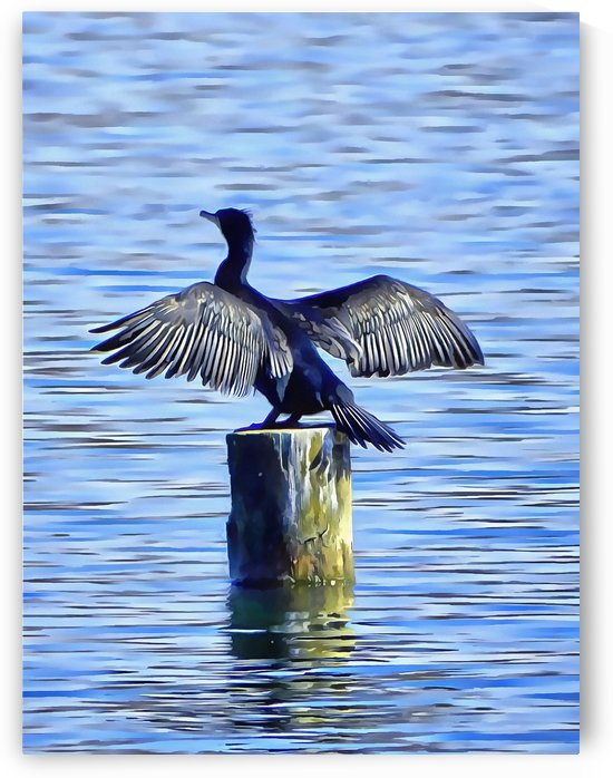 Cormorant Drying  His Wings by Dorothy Berry-Lound