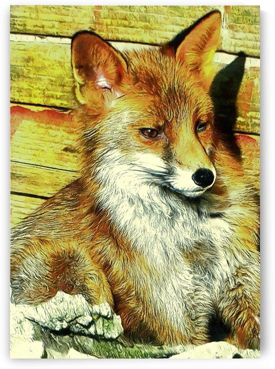 Portrait of an Urban Fox by Dorothy Berry-Lound