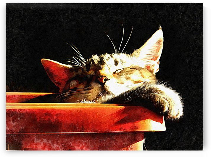 Wake Me When It Is Dinner Time by Dorothy Berry-Lound