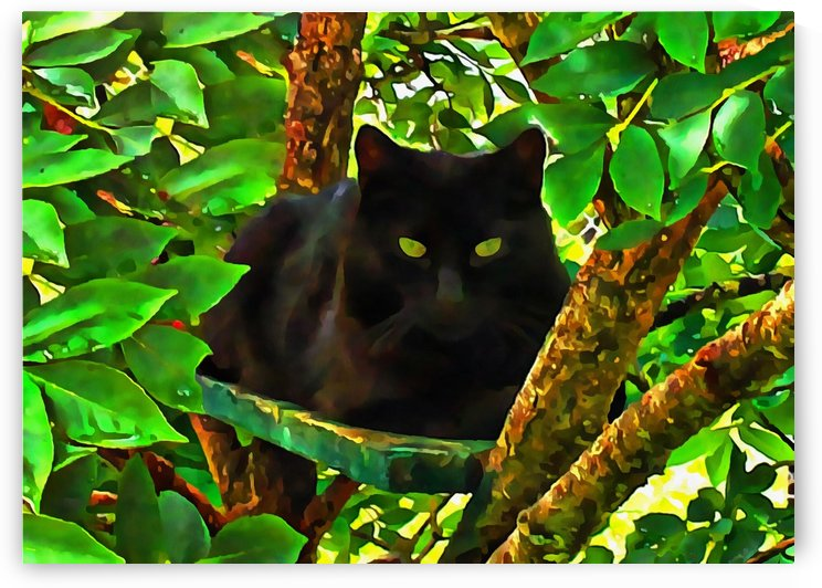 Watching From Above by Dorothy Berry-Lound