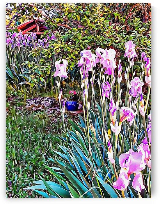 My Secret Iris Garden by Dorothy Berry-Lound
