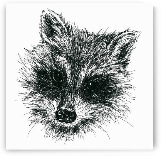 Raccoon Portrait Ink by MM Anderson
