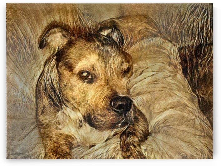 Dog Drawing (14) by NganHongTruong
