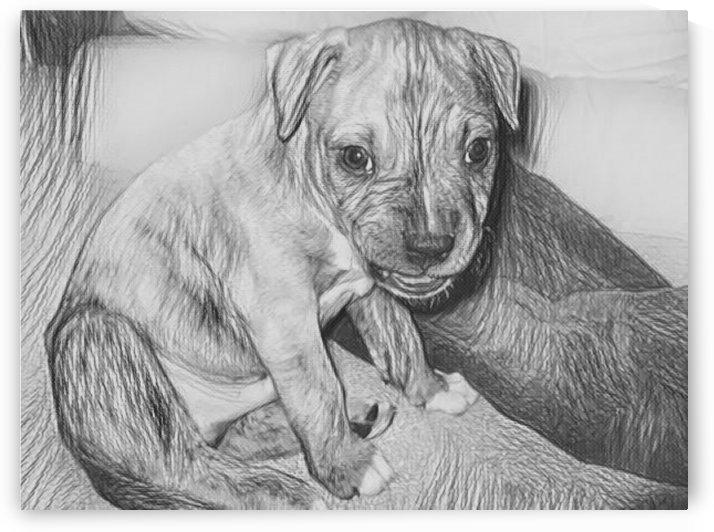 Dog Drawing (34) by NganHongTruong