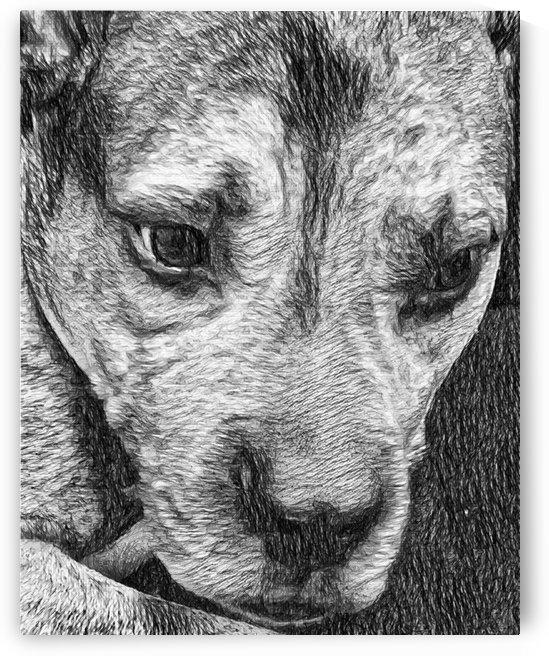 Dog Drawing (31) by NganHongTruong