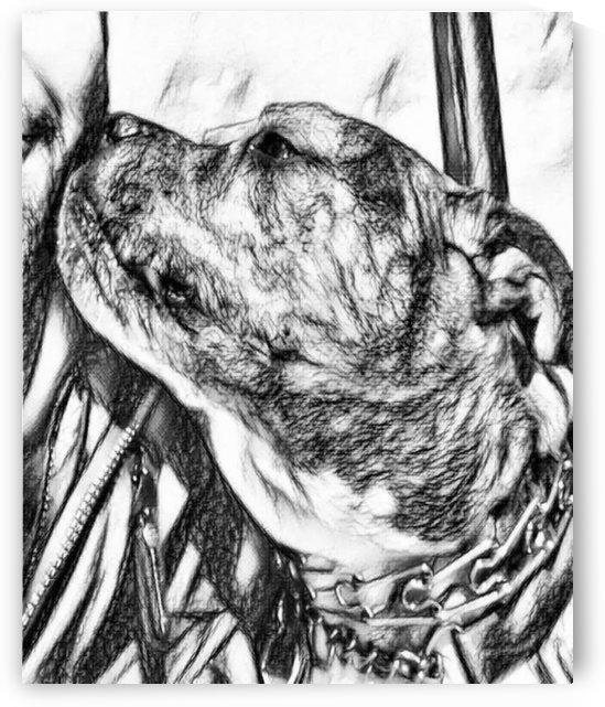 Dog Drawing (32) by NganHongTruong