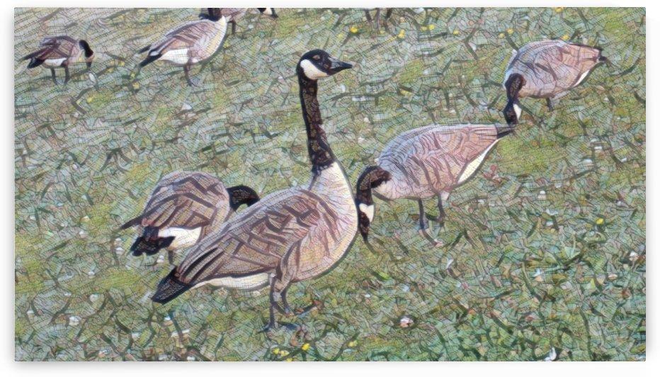3 Ducks by NganHongTruong