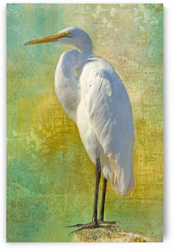 Tropical Egret by HH Photography of Florida