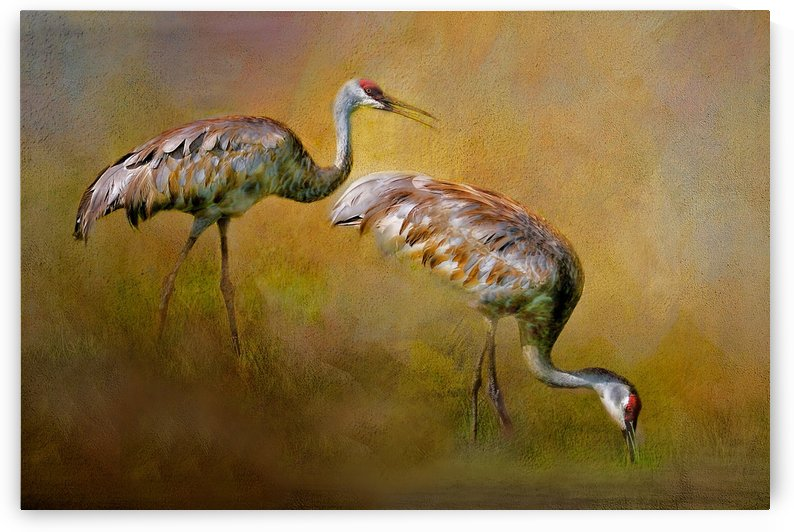 Foraging Sandhills by HH Photography of Florida