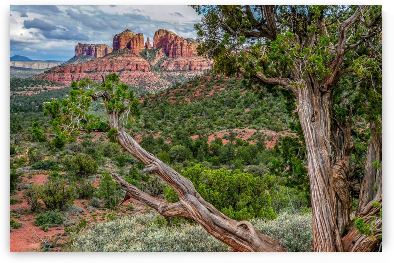 Cathedral Rock by James Radford