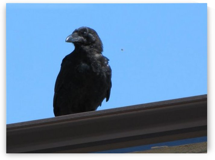 crow by BLuR