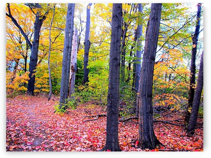 Fall Season (17) 2 by NganHongTruong