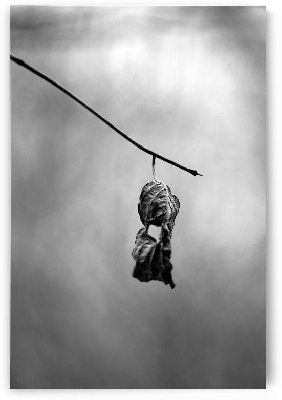 Death Depending BW by Mary Bedy