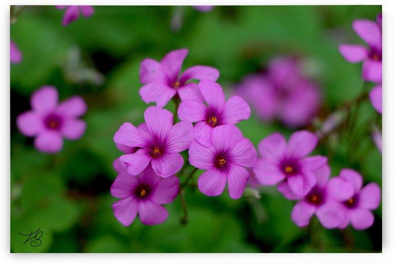 Flowerz by IsabelVictoria