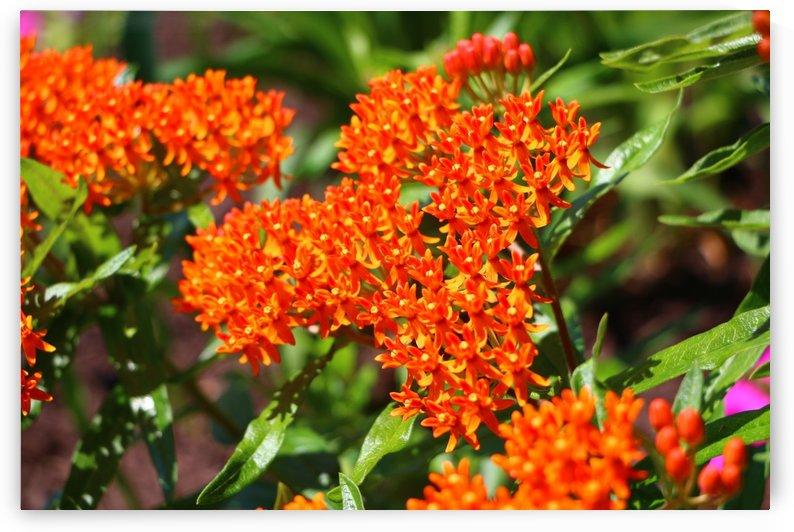 Bright Orange  by IsabelVictoria