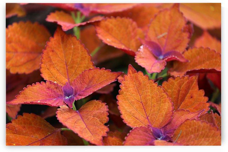 Orange Foliage Dow Gardens 0626718 by Mary Bedy
