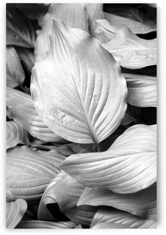 Softly Curving Foliage BW 062618 by Mary Bedy