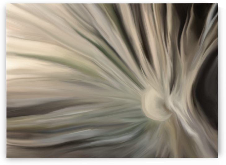 Dandelion Abstraction by Mary Crook
