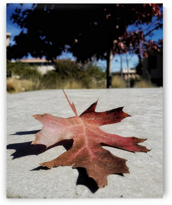 Fall in action by Wilken Photos
