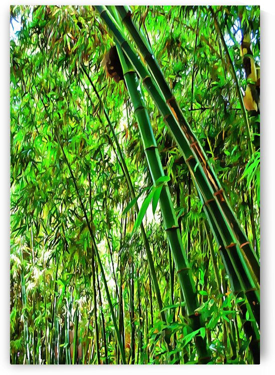 Bamboo in Jardin Majorelle Marrakech 1 by Dorothy Berry-Lound